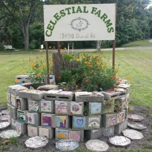Celestial Farms Petting Zoo and Pony Parties